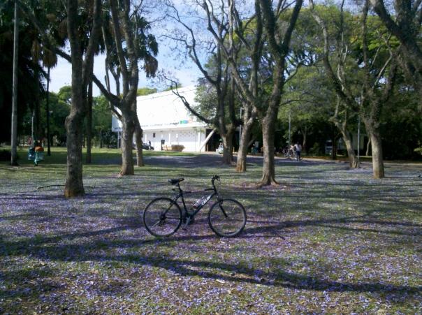 Bike & Ibirapuera