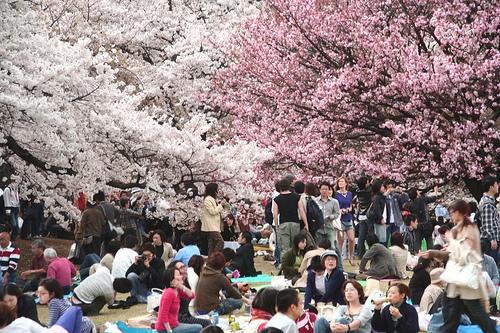 36ª Festa das Cerejeiras - Parque do Carmo